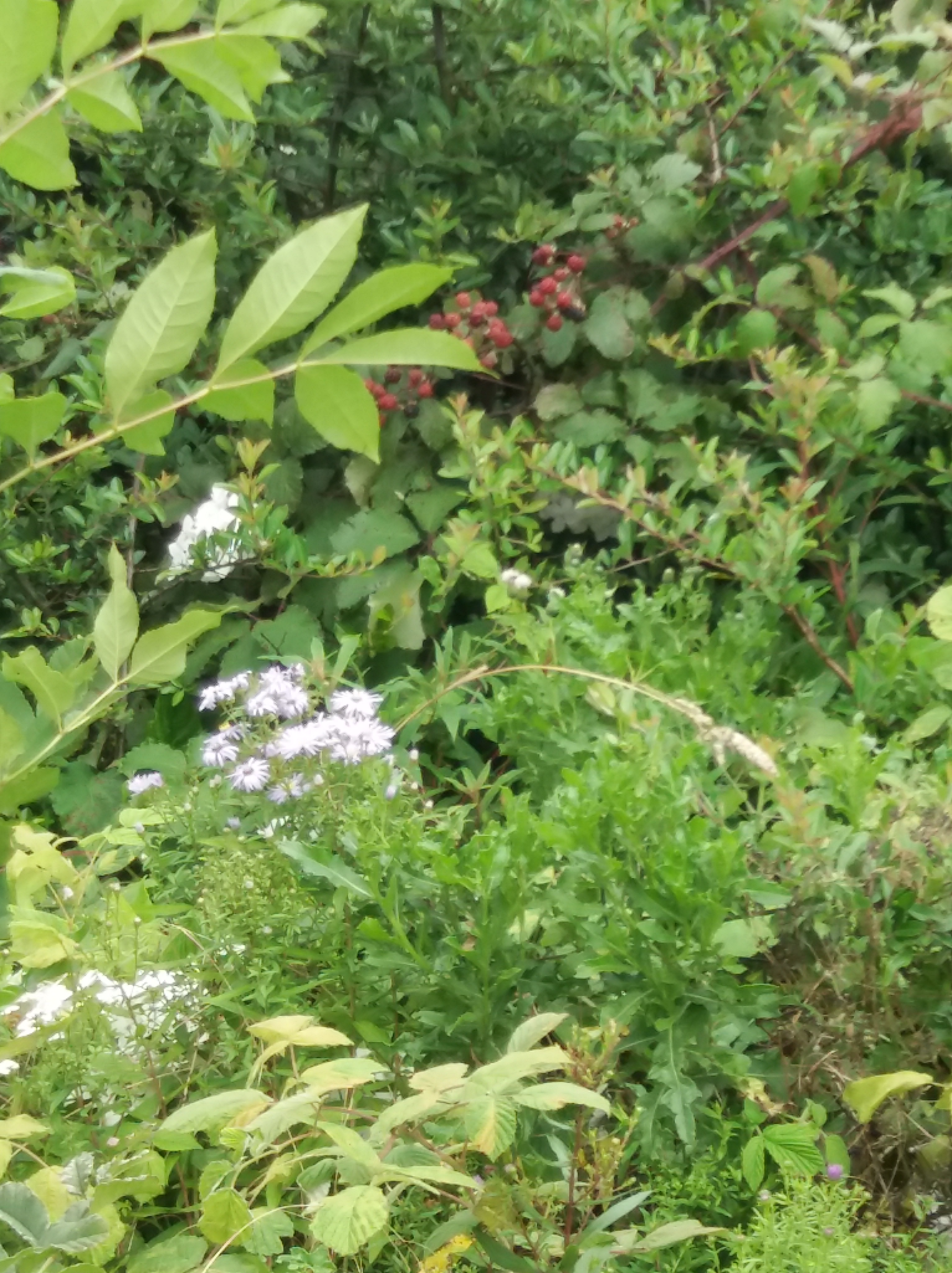 Flowers in God's peaceful garden